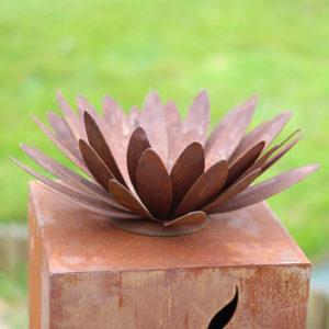 Fleur de chrysanthème